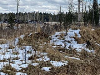 Photo 12: TWP RD 290 WEST OF BOTTREL: Cochrane Land for sale : MLS®# A1051910