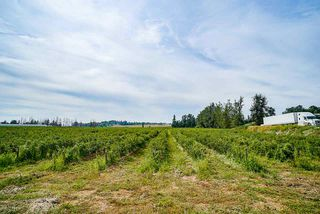 Photo 10: 625 BRADNER Road in Abbotsford: Aberdeen House for sale : MLS®# R2397446