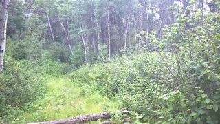 Photo 8: 5 51410 RGE RD 271: Rural Parkland County Rural Land/Vacant Lot for sale : MLS®# E4203574