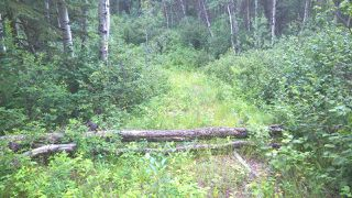 Photo 7: 5 51410 RGE RD 271: Rural Parkland County Rural Land/Vacant Lot for sale : MLS®# E4203574