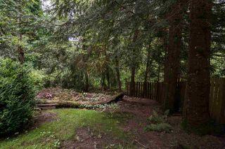Photo 36: 23339 TAMARACK Lane in Maple Ridge: Albion House for sale : MLS®# R2471011