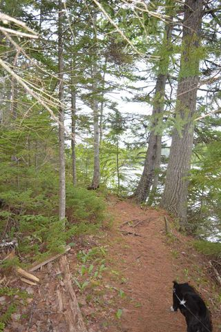 Photo 7: Easy Street in Wallace River West: 102N-North Of Hwy 104 Vacant Land for sale (Northern Region)  : MLS®# 202010385