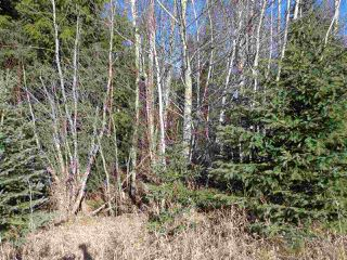Photo 5: LOT A 16 Highway in McBride: McBride - Rural West Land for sale (Robson Valley (Zone 81))  : MLS®# R2496827