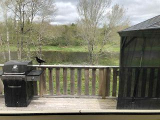 Photo 23: 1385 Highway 348 in Caledonia: 303-Guysborough County Residential for sale (Highland Region)  : MLS®# 202009049