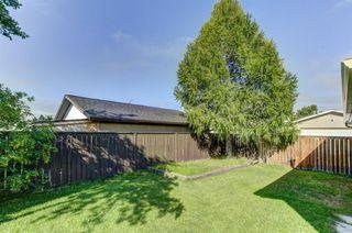 Photo 31: 99 ABERGALE Place NE in Calgary: Abbeydale Detached for sale : MLS®# C4293699