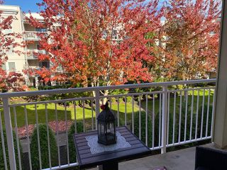 """Photo 22: 307 20189 54 Avenue in Langley: Langley City Condo for sale in """"CATALINA GARDENS"""" : MLS®# R2512331"""