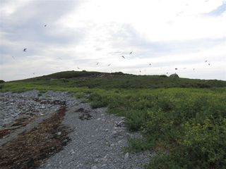 Photo 4: Pages Island in Port La Tour: 407-Shelburne County Vacant Land for sale (South Shore)  : MLS®# 202022571