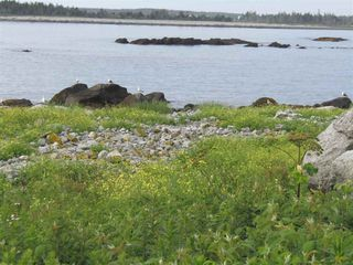 Photo 9: Pages Island in Port La Tour: 407-Shelburne County Vacant Land for sale (South Shore)  : MLS®# 202022571
