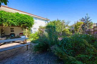 Photo 31: 23938 115 Avenue in Maple Ridge: Cottonwood MR House for sale : MLS®# R2502768