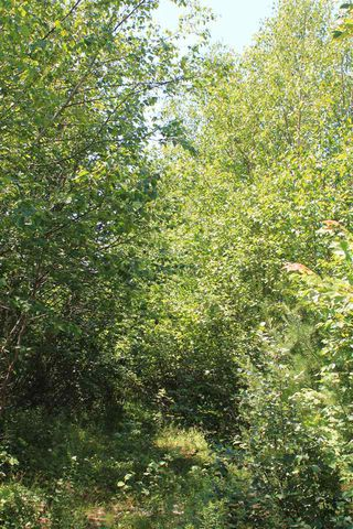Photo 2: Lot 4 Morganville Road in Morganville: 401-Digby County Vacant Land for sale (Annapolis Valley)  : MLS®# 202012965