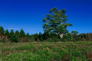 Photo 11: 440 Purdy Road in Waldeck: 400-Annapolis County Vacant Land for sale (Annapolis Valley)  : MLS®# 202018774