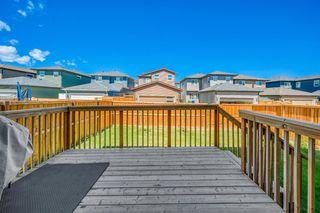 Photo 25: 66 CORNERSTONE Circle NE in Calgary: Cornerstone Detached for sale : MLS®# A1022524