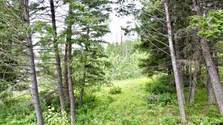 Photo 14: 437 WOODLAND Drive in Williams Lake: Williams Lake - City Land for sale (Williams Lake (Zone 27))  : MLS®# R2475217