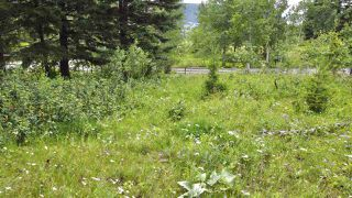 Photo 17: 437 WOODLAND Drive in Williams Lake: Williams Lake - City Land for sale (Williams Lake (Zone 27))  : MLS®# R2475217