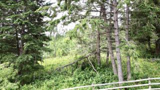 Photo 13: 437 WOODLAND Drive in Williams Lake: Williams Lake - City Land for sale (Williams Lake (Zone 27))  : MLS®# R2475217