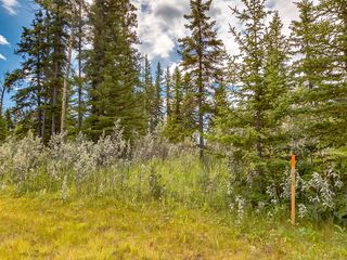 Photo 7: 11-34364 RANGE ROAD 42 in : Rural Mountain View County Land for sale (Mountain View)
