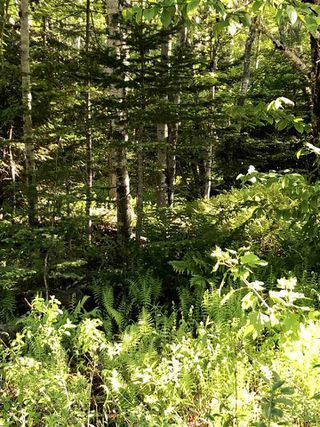 Photo 7: B-79 & B-1 Beamish Road in East Uniacke: 105-East Hants/Colchester West Vacant Land for sale (Halifax-Dartmouth)  : MLS®# 202004604