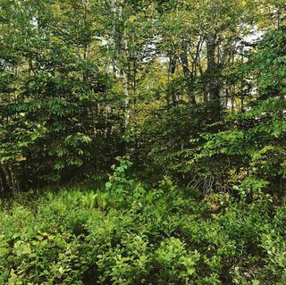 Photo 4: B-79 & B-1 Beamish Road in East Uniacke: 105-East Hants/Colchester West Vacant Land for sale (Halifax-Dartmouth)  : MLS®# 202004604