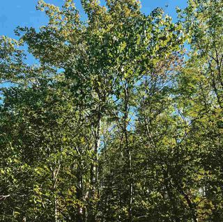 Photo 5: B-79 & B-1 Beamish Road in East Uniacke: 105-East Hants/Colchester West Vacant Land for sale (Halifax-Dartmouth)  : MLS®# 202004604