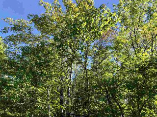 Photo 8: B-79 & B-1 Beamish Road in East Uniacke: 105-East Hants/Colchester West Vacant Land for sale (Halifax-Dartmouth)  : MLS®# 202004604