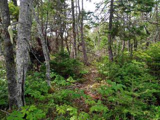 Photo 2: Lot 29-B Seacrest Lane in Northwest Cove: 405-Lunenburg County Vacant Land for sale (South Shore)  : MLS®# 202015336