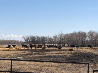 Photo 1: 0 20 Highway in Dauphin: R10 Farm for sale (R30 - Dauphin and Area)  : MLS®# 202008642