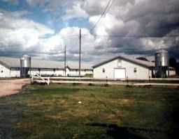 Photo 2:  in GRUNTHAL: Manitoba Other Farm for sale : MLS®# 9819855