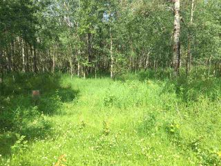 Photo 2: TWP RD 550 & RGE RD 203: Rural Strathcona County Rural Land/Vacant Lot for sale : MLS®# E4166392