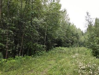 Photo 14: Lot #2 Eagle Bay Road: Eagle Bay Vacant Land for sale (Shuswap Lake)  : MLS®# 10187525