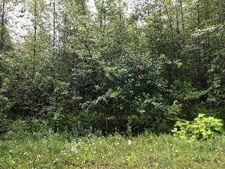 Photo 13: Lot #2 Eagle Bay Road: Eagle Bay Vacant Land for sale (Shuswap Lake)  : MLS®# 10187525