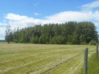 Photo 17: 49112 Range Road 73: Rural Brazeau County Rural Land/Vacant Lot for sale : MLS®# E4203144