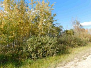 Photo 3: RR 240 betw Twp 580 & Twp 582 (south 1/2): Rural Sturgeon County Rural Land/Vacant Lot for sale : MLS®# E4216489