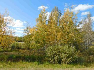 Photo 4: RR 240 betw Twp 580 & Twp 582 (south 1/2): Rural Sturgeon County Rural Land/Vacant Lot for sale : MLS®# E4216489