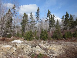 Photo 4: Lot 44 10 Kestrel Court in Halibut Bay: 9-Harrietsfield, Sambr And Halibut Bay Vacant Land for sale (Halifax-Dartmouth)  : MLS®# 202100575