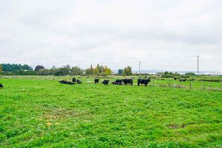 Photo 38: 17731 WESTMINSTER Highway in Richmond: East Richmond Agri-Business for sale : MLS®# C8035442