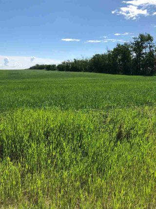 Photo 9: RR 254 1 mile N of Twp 574: Rural Sturgeon County Rural Land/Vacant Lot for sale : MLS®# E4187338