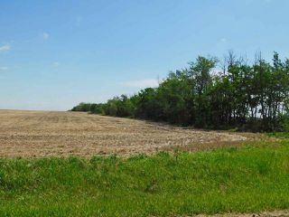 Photo 11: RR 254 1 mile N of Twp 574: Rural Sturgeon County Rural Land/Vacant Lot for sale : MLS®# E4187338