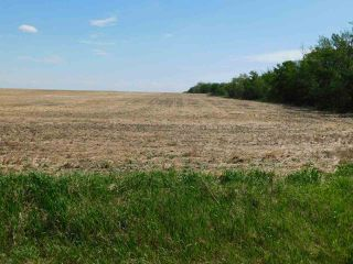 Photo 13: RR 254 1 mile N of Twp 574: Rural Sturgeon County Rural Land/Vacant Lot for sale : MLS®# E4187338