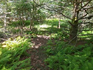 Photo 10: Lots Shore Road in Churchover: 407-Shelburne County Vacant Land for sale (South Shore)  : MLS®# 202011924