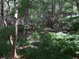 Photo 12: Lots Shore Road in Churchover: 407-Shelburne County Vacant Land for sale (South Shore)  : MLS®# 202011924
