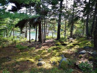 Photo 4: Vac. Land Shady Pine Lane in Heckman's Island: 405-Lunenburg County Vacant Land for sale (South Shore)  : MLS®# 202018988