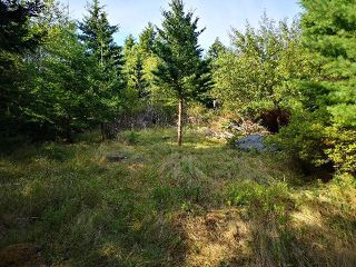 Photo 6: Vac. Land Shady Pine Lane in Heckman's Island: 405-Lunenburg County Vacant Land for sale (South Shore)  : MLS®# 202018988