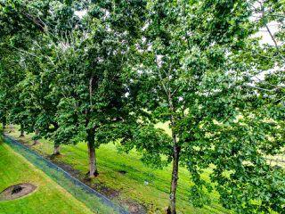 "Photo 8: 324 3451 SPRINGFIELD Drive in Richmond: Steveston North Condo for sale in ""Admiral Court"" : MLS®# R2472758"