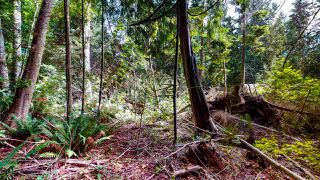 Photo 23: 1225 - 1227 ROBERTS CREEK Road: Roberts Creek House for sale (Sunshine Coast)  : MLS®# R2476356