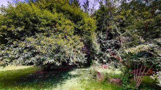 Photo 3: 1225 - 1227 ROBERTS CREEK Road: Roberts Creek House for sale (Sunshine Coast)  : MLS®# R2476356