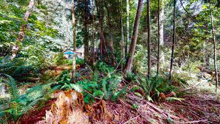 Photo 22: 1225 - 1227 ROBERTS CREEK Road: Roberts Creek House for sale (Sunshine Coast)  : MLS®# R2476356