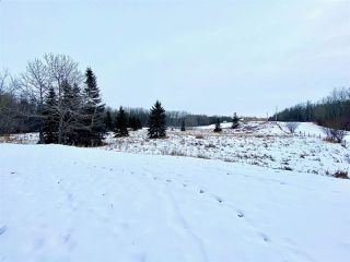 Photo 4: 54325 RGE RD 280: Rural Sturgeon County House for sale : MLS®# E4215294