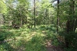 Photo 6: 5238 County Rd 121 Road in Minden Hills: Property for sale : MLS®# X4678347