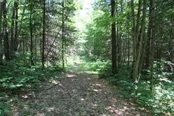 Photo 8: 5238 County Rd 121 Road in Minden Hills: Property for sale : MLS®# X4678347