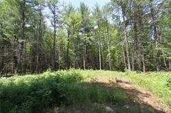 Photo 5: 5238 County Rd 121 Road in Minden Hills: Property for sale : MLS®# X4678347